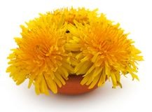 Medicinal dandelion. In a bowl over white background stock photography