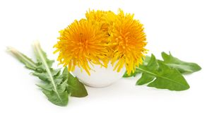 Medicinal dandelion. With green leaves over white background royalty free stock photo