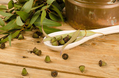 Medicinal eucalyptus stock photos