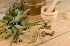 Medicinal eucalyptus Stock Images
