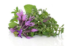 Medicinal Flower and Herb Leaves Stock Photo