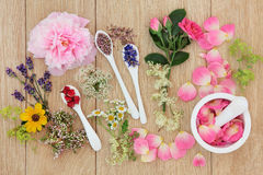 Medicinal Healing Herbs and Flowers Royalty Free Stock Images
