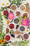 Medicinal Healing Herbs and Flowers Stock Photos