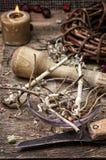 Medicinal herb Royalty Free Stock Photo