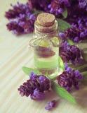 Medicinal herb. Common self heal Prunella Vulgaris scented oil. Medicinal herb. Common self heal Prunella Vulgaris scented oil royalty free stock photos