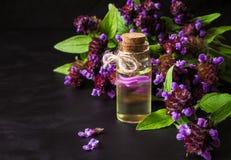Medicinal herb. Common self heal Prunella Vulgaris scented oil.  stock images