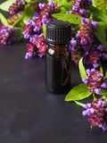 Medicinal herb. Common self heal Prunella Vulgaris scented oil.  stock photography