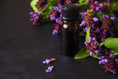 Medicinal herb. Common self heal Prunella Vulgaris scented oil.  royalty free stock image