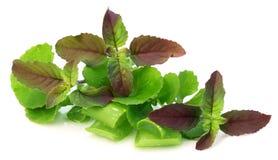 Medicinal herbs Royalty Free Stock Image
