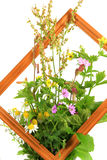 Medicinal herbs. As a bouquet with a picture frame Royalty Free Stock Images