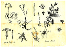Medicinal herbs. Hand-drawn collection. (Not just as a spring theme) - medicinal herbs and wild flowers meadows. Part 1 Stock Photos