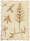 Medicinal herbs. Hand-drawn collection. (Not just as a spring theme) - medicinal herbs and wild flowers meadows Stock Photos
