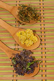 Medicinal herbs. Royalty Free Stock Images