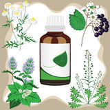 Medicinal herbs with bottle, vector illustration. Green pharmacy vector illustration