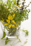 Medicinal herbs bouquet. Stock Images