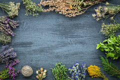Medicinal herbs bunches on gray wooden board with copy space. Medicinal herbs bunches on gray wooden board with copy space for text. Herbal medicine. Top view Royalty Free Stock Photos