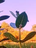 Medicinal herbs. Closer medicinal hearbs stock photos
