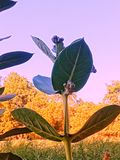 Medicinal herbs stock photos