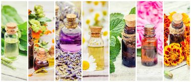 Medicinal herbs collage. royalty free stock photo
