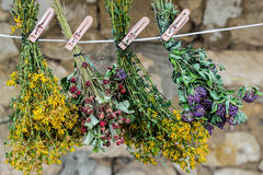 Medicinal herbs are dried in bunches on a rope Royalty Free Stock Photography