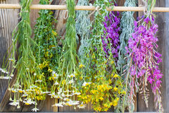 Medicinal herbs dry Stock Image