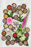 Medicinal Herbs and Flowers Stock Images
