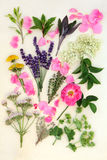 Medicinal Herbs and Flowers Royalty Free Stock Images