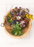 Medicinal herbs and flowers. Stock Images