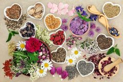 Medicinal Herbs and Flowers. Used in herbal medicine, homoeopathic and aromatherapy remedies on hemp paper background. Top View Stock Image