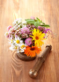 Medicinal herbs and flowers Stock Image