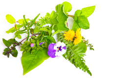Medicinal herbs and globules Royalty Free Stock Image