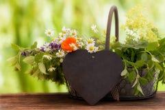 Medicinal herbs, Healing plants Royalty Free Stock Image
