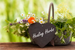 Medicinal herbs, Healing plants. In a basket Royalty Free Stock Photos