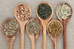 Medicinal Herbs. Herb selection for alternative medicine in olive wood spoons over beige background, hyssop, galangal root, damiana, nettle, mistletoe and stock photo