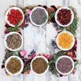 Medicinal Herbs Stock Image