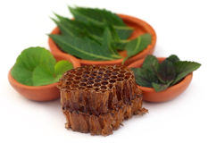 Medicinal herbs with honey comb Stock Image