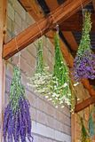 Medicinal herbs are hung on the crossbar for drying. Alternative medicine royalty free stock photo