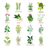 Medicinal Herbs Icons Flat Stock Photography