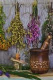 Medicinal herbs. And ingredients for the preparation of therapeutic infusions stock images