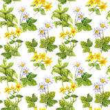 Medicinal herbs, medical flowers . Herbal, floral repeating pattern. Watercolor Royalty Free Stock Images