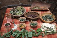 Medicinal herbs. In celtic culture Stock Image