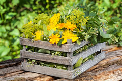Medicinal herbs, medicinal plants in wooden box. For Homeopathy Royalty Free Stock Photo