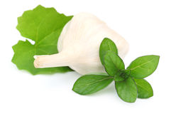 Medicinal Herbs- Mint leaves Garlic and Brahmi lata Stock Images