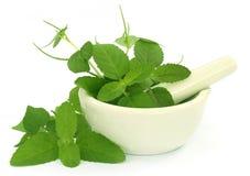 Medicinal herbs with mortar and pestle Royalty Free Stock Photos