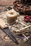 Medicinal herbs and roots Stock Photography
