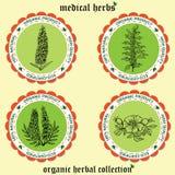 Medicinal herbs 1 Stock Images
