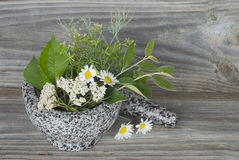 Medicinal herbs in stone mortar Royalty Free Stock Photography