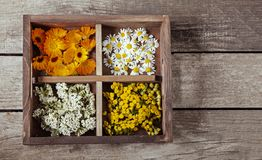 Medicinal herbs tansy daisy calendula yarrow in an old wooden box on the table.  stock images