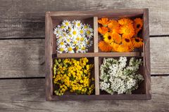 Medicinal herbs tansy daisy calendula yarrow in an old wooden bo. X on the table Royalty Free Stock Images