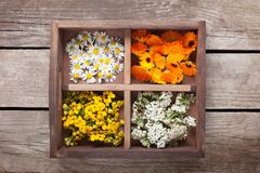 Medicinal herbs tansy daisy calendula yarrow in an old wooden bo. X on the table royalty free stock photo